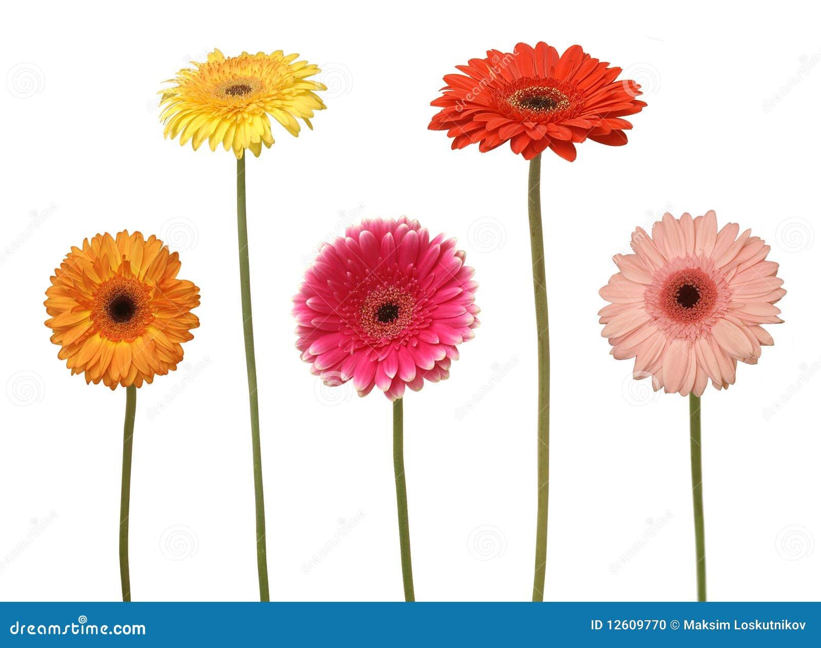 Five Flowers Stock Photo - Image: 12609770