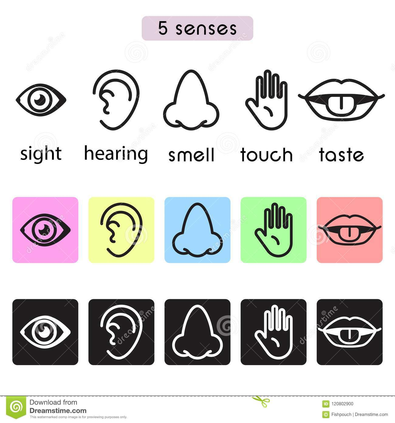 Five Human Senses Sight, Hearing, Smell, Touch And Taste Vector Line ...