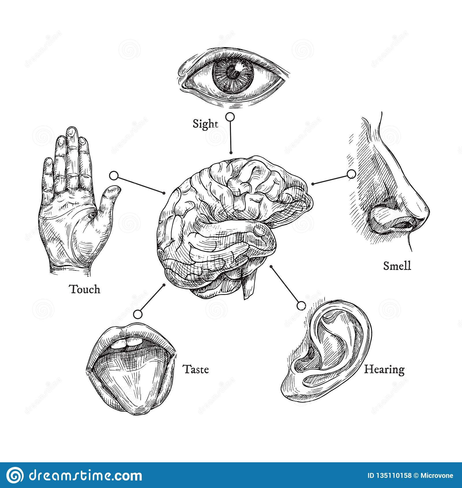 Five human senses. Sketch mouth and eye, nose and ear, hand and brain. Doodle body part vector set