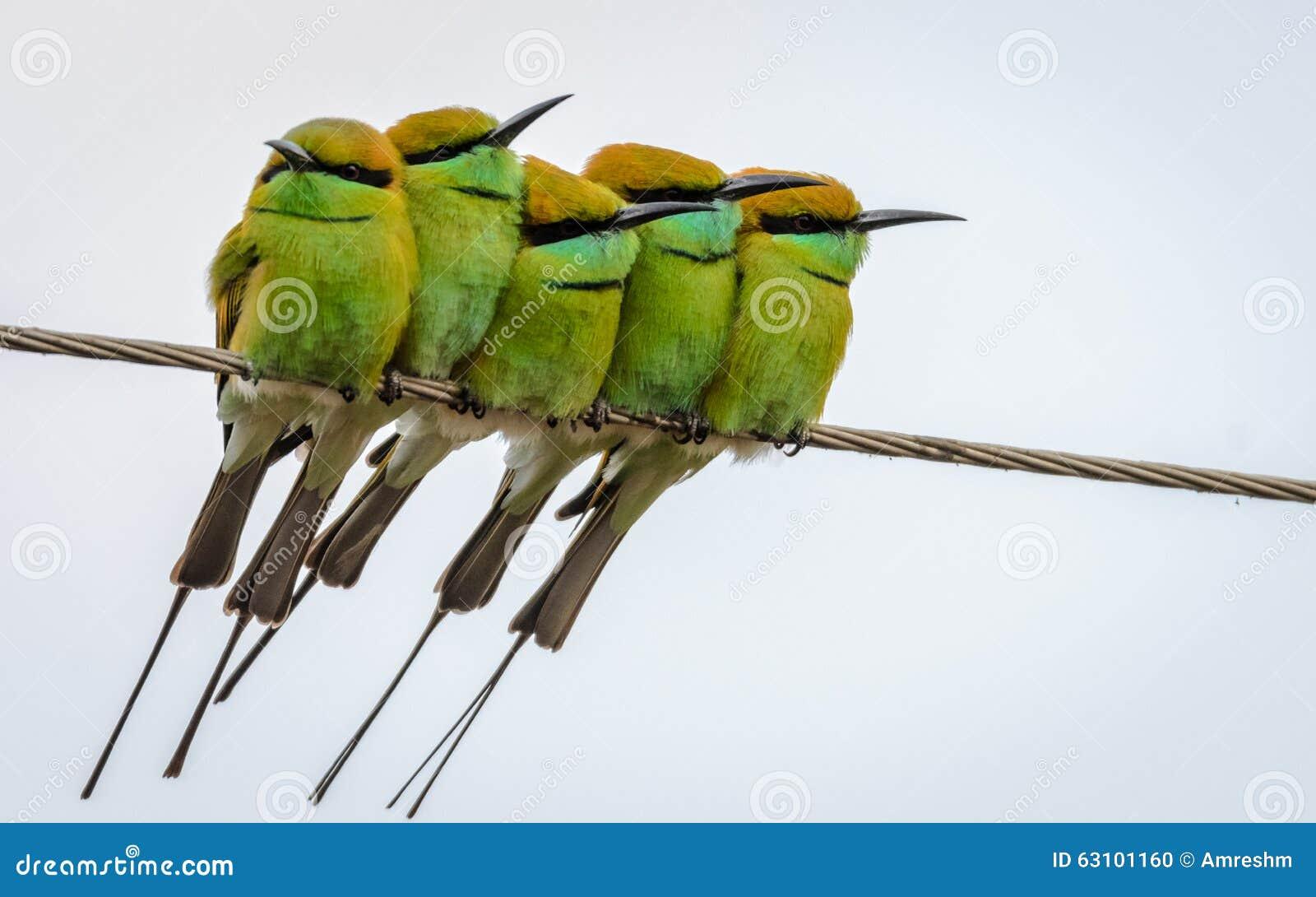 Five Little Green Bee eaters