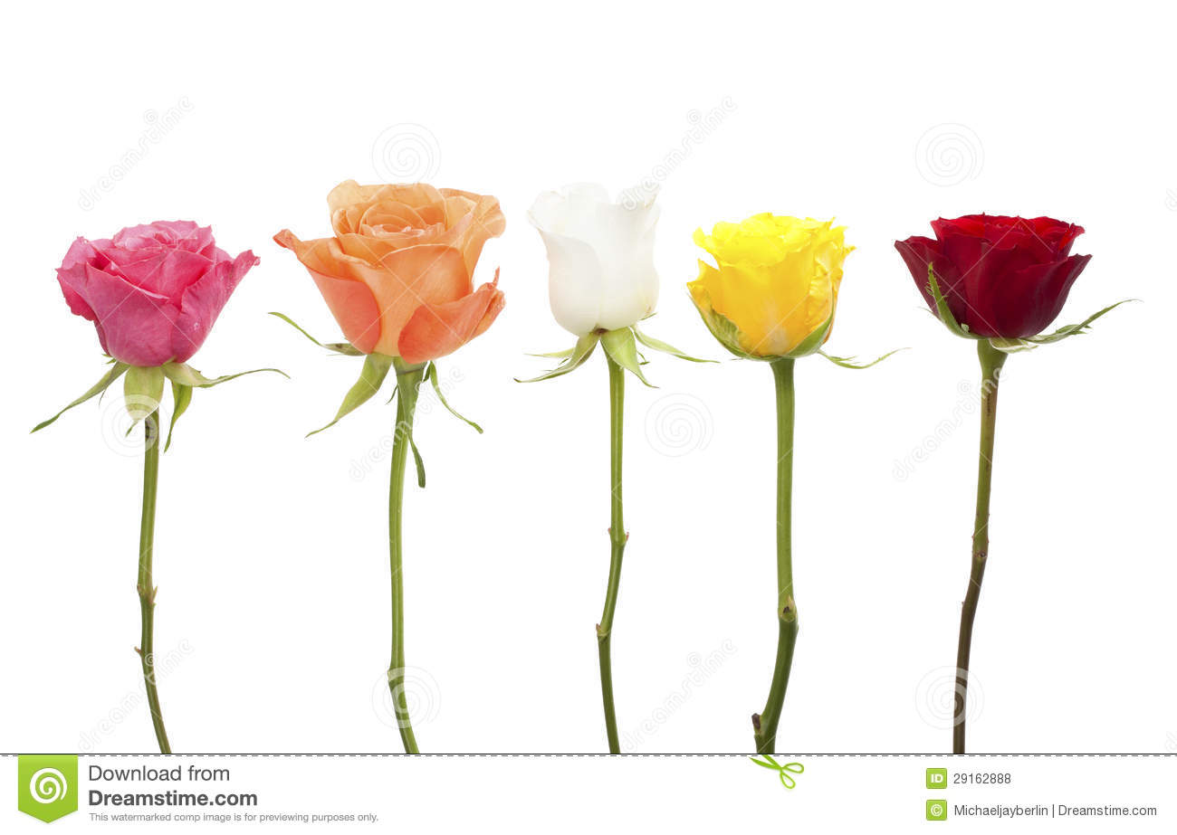 Image result for 5 roses in a row