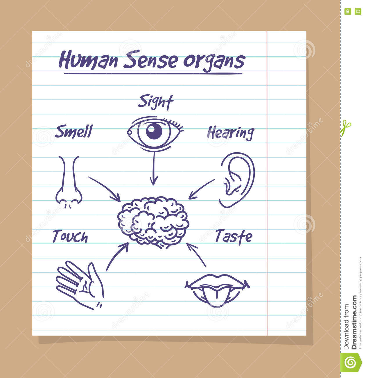 Five senses sketch on notebook page stock vector illustration of five senses sketch human eye nose and ear smell and taste and touch drawn in a pupil notebook page vector illustration ccuart Gallery
