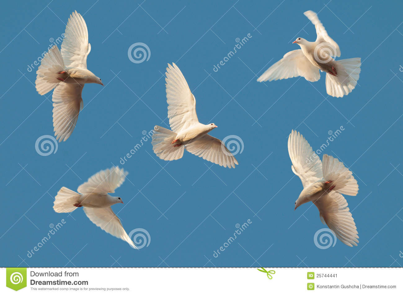 Five white pigeons fly in the sky