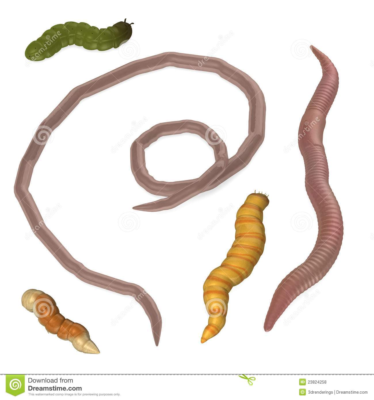 Five Worm Insects Royalty Free Stock Photos