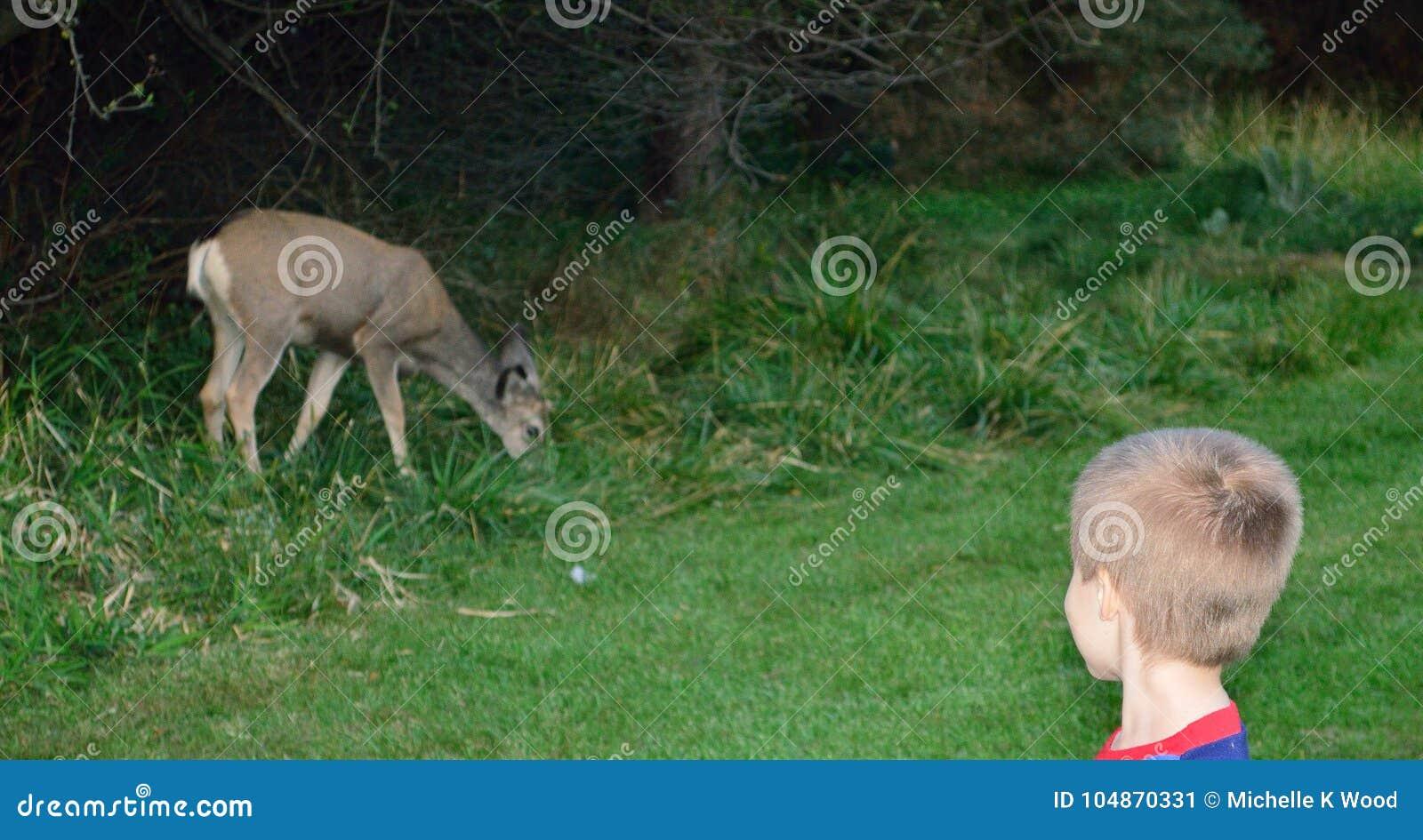 Five-year-old Boy meets deer