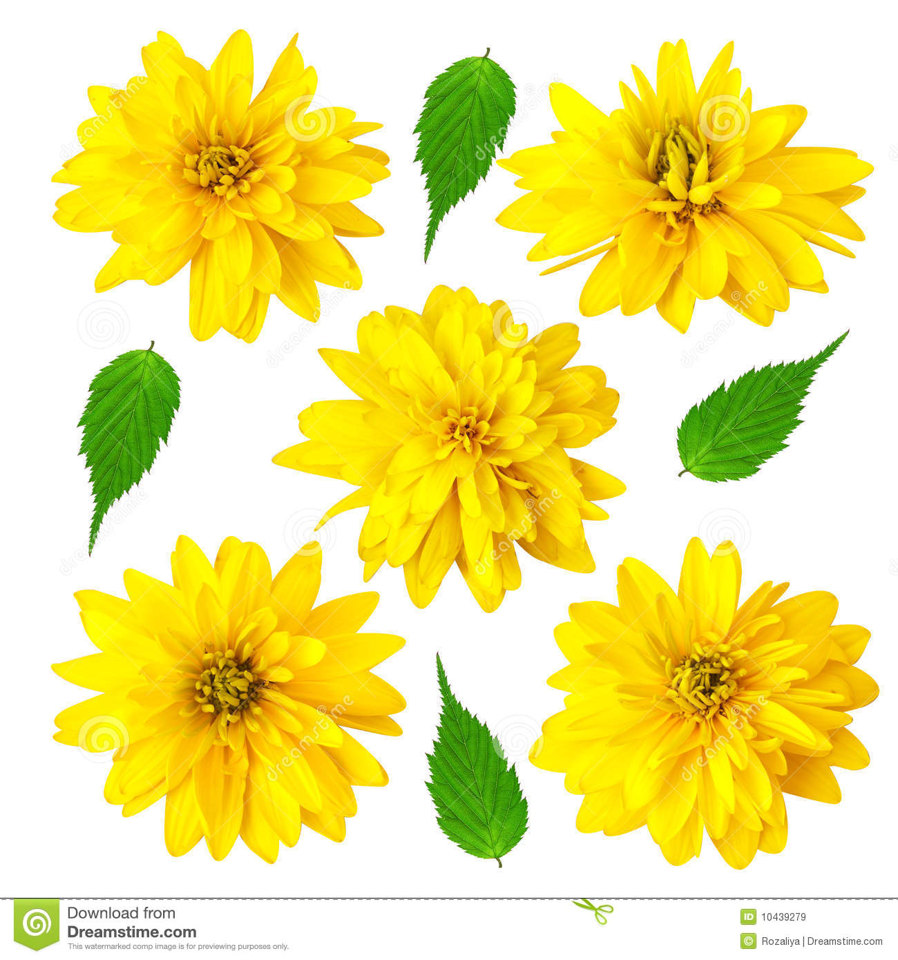 Five Yellow Color Flowers With Green Leafs Stock Image Image Of