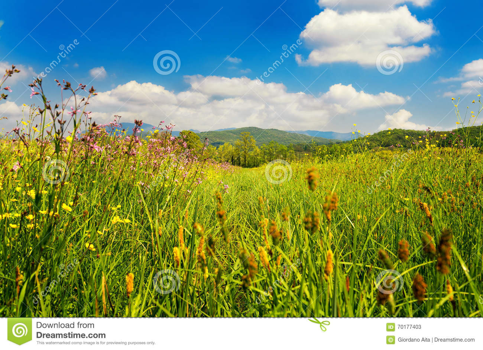 Fjädra den tid… ron lämnar, naturlig bakgrund