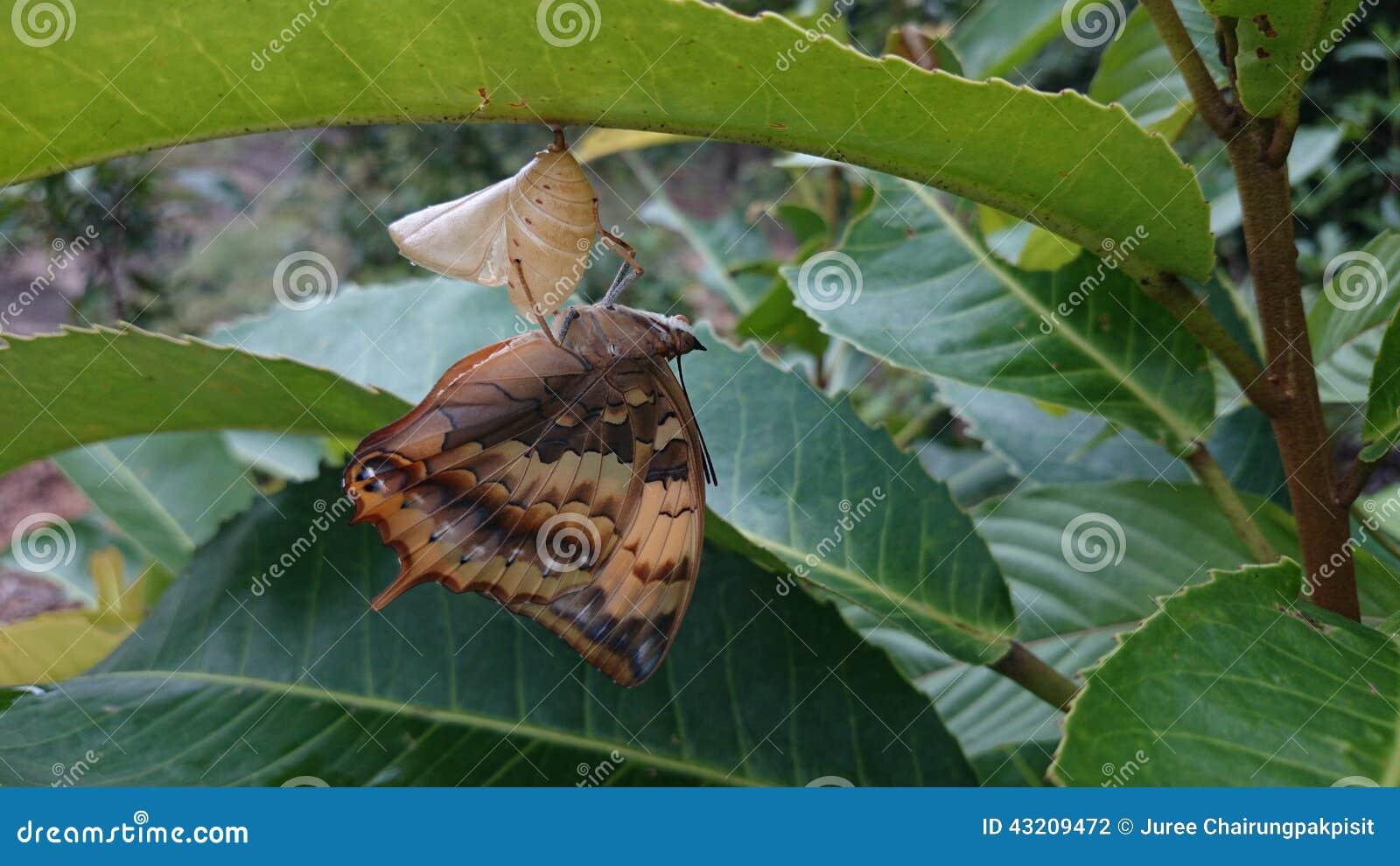 Download Fjäril arkivfoto. Bild av livstid, fjäril, angus, nyfött - 43209472
