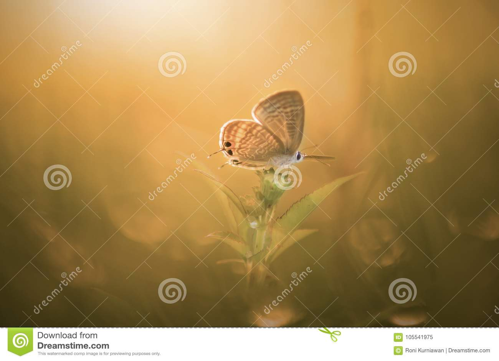 Fjäril djur, makro, bokeh, kryp, natur,