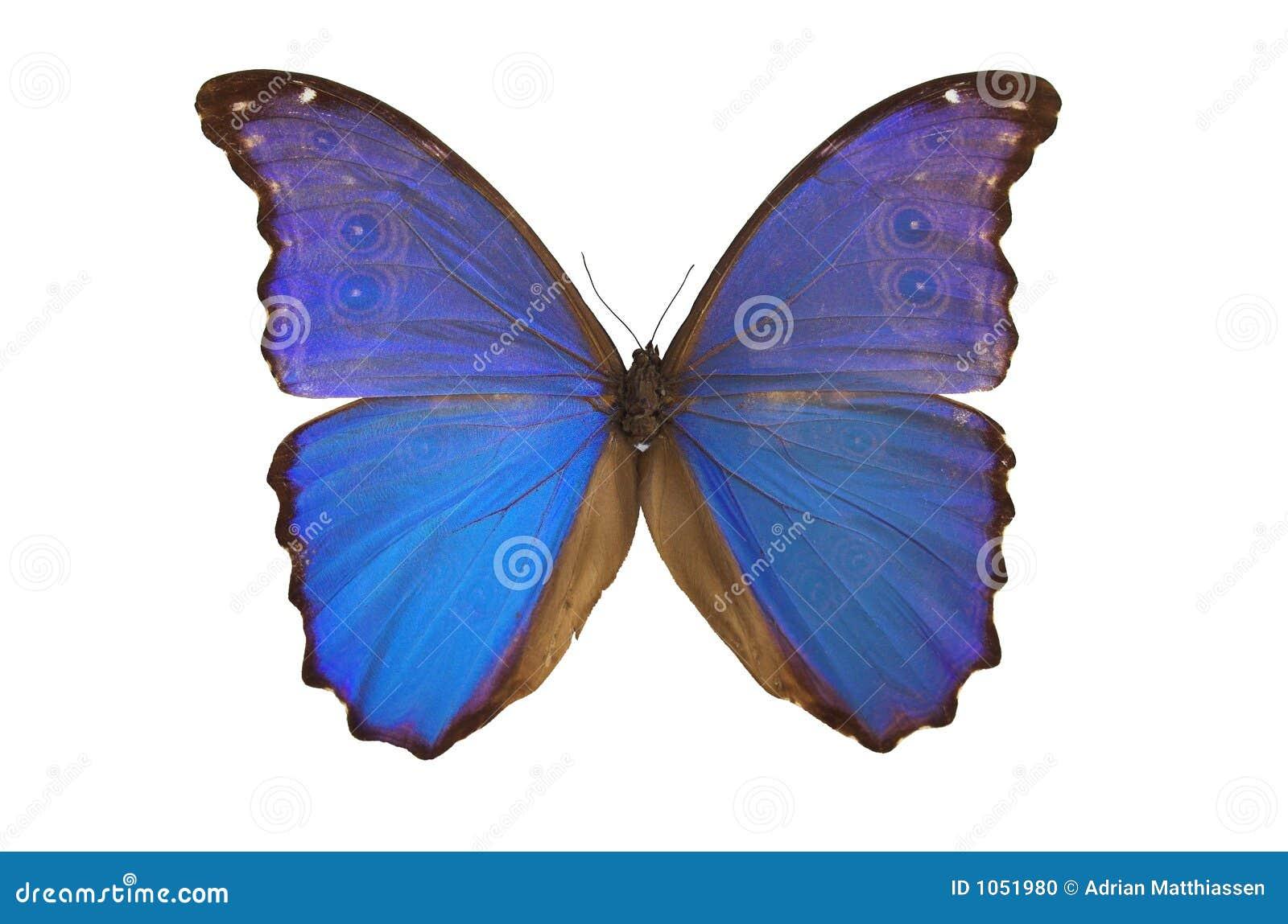 Fjäril för 5 blue