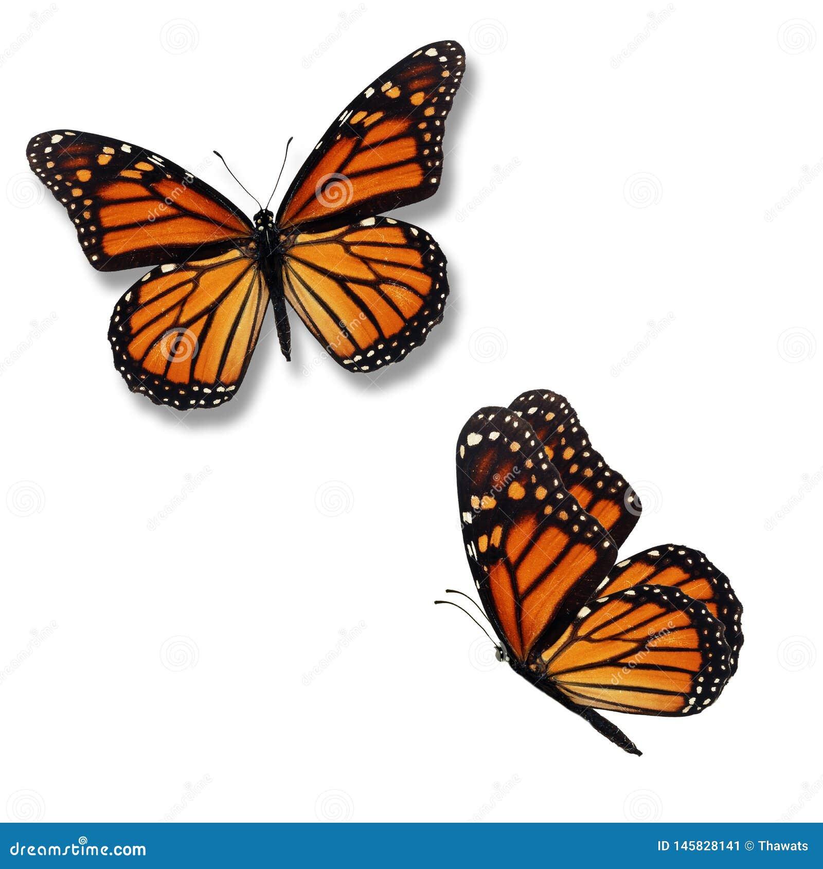 Fjäril för monark två