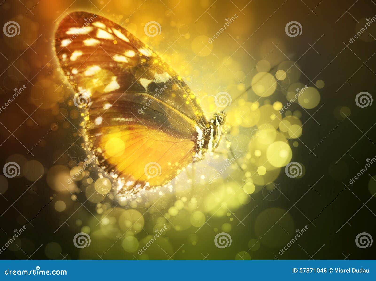 Fjäril i en dröm
