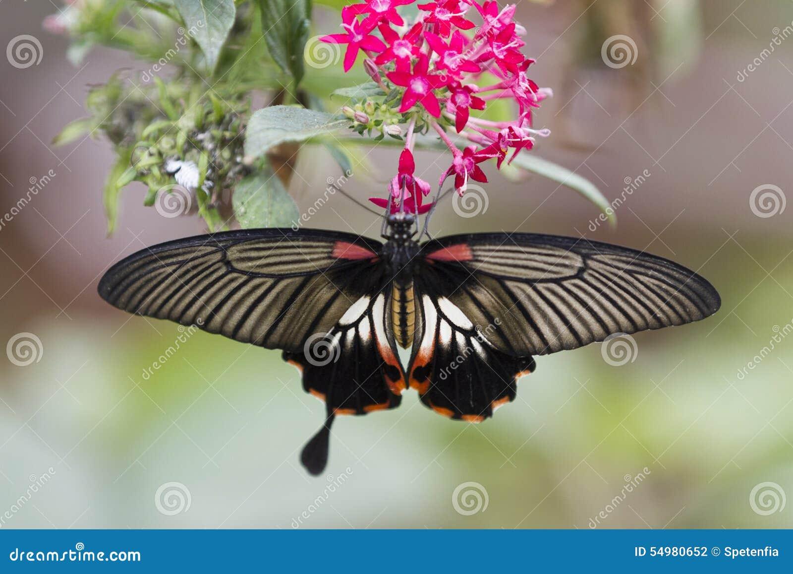 Fjäril på blomman