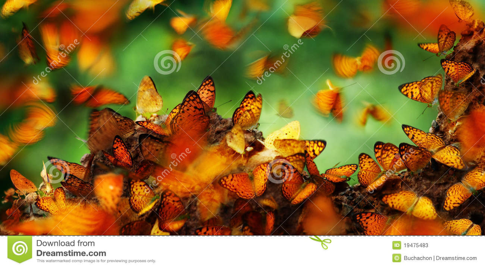 Fjärilar många