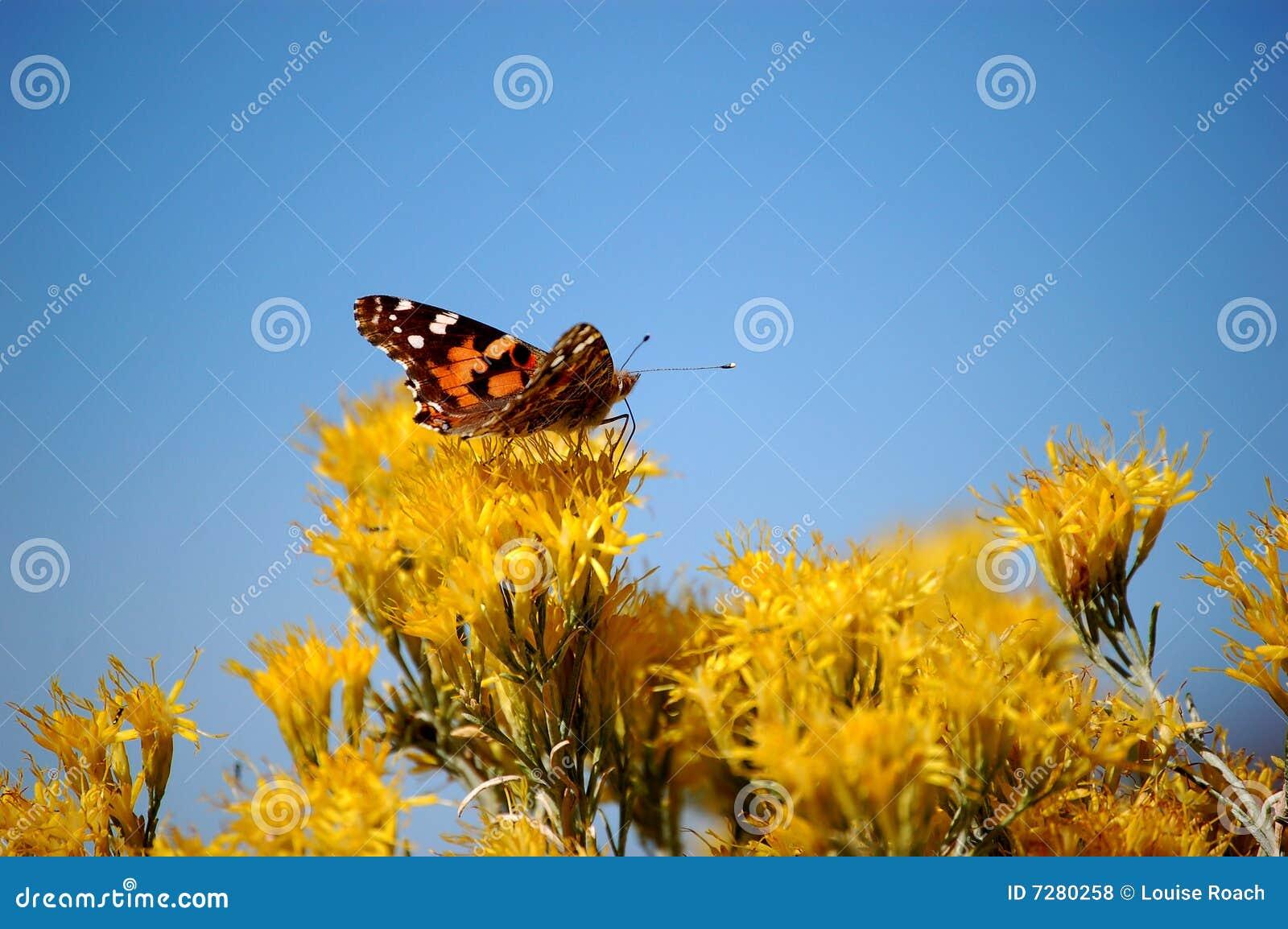 Fjärilen blommar orange yellow