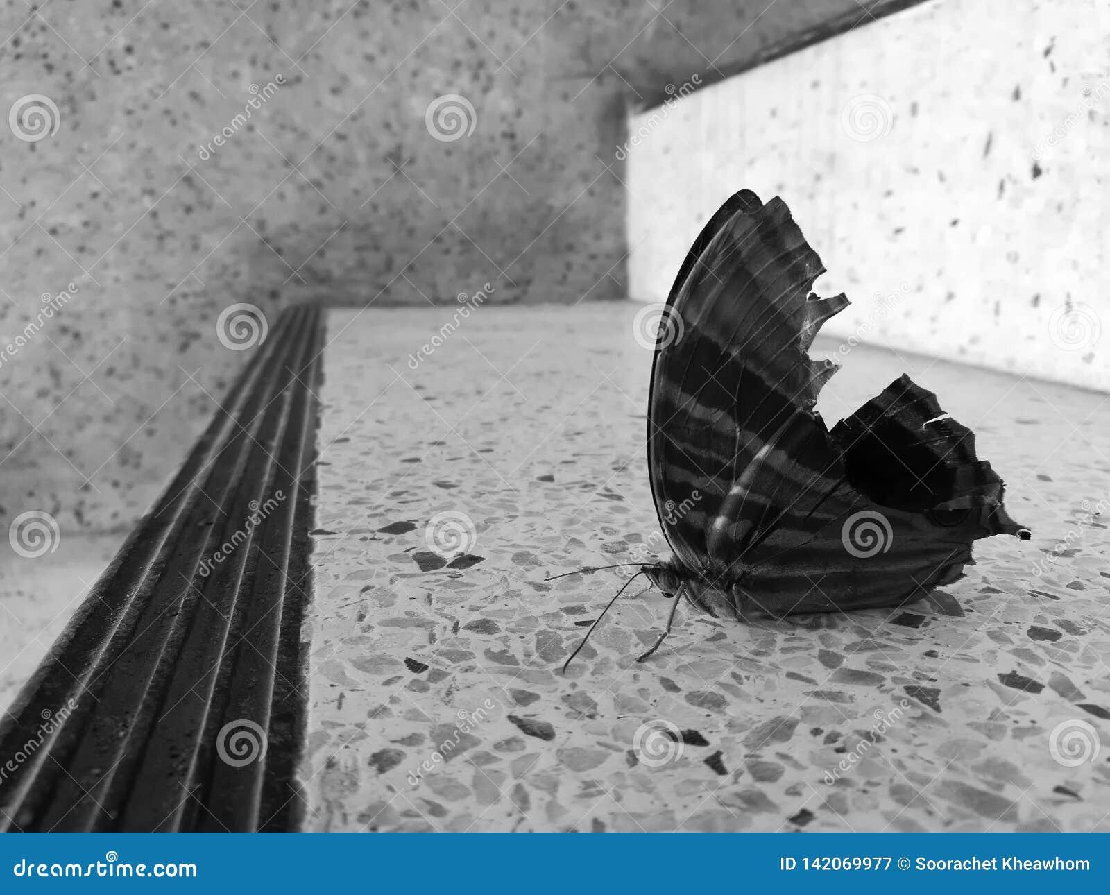 Fjärilen på en stege