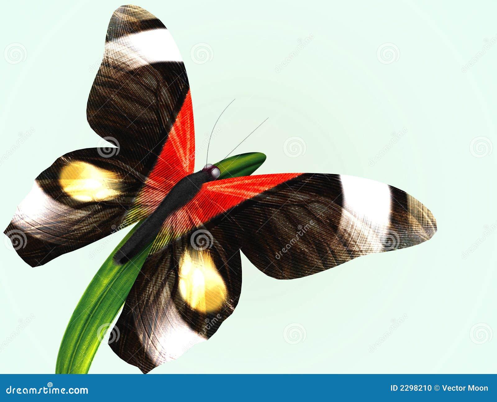 Fjärilsgräs