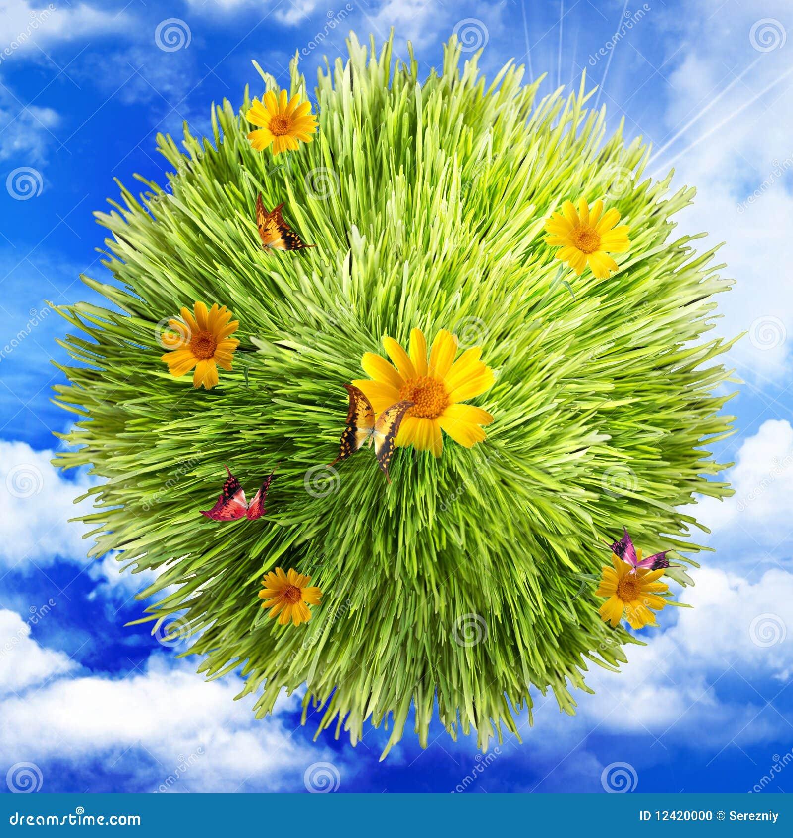Fjärilsoklarheter blommar gräs