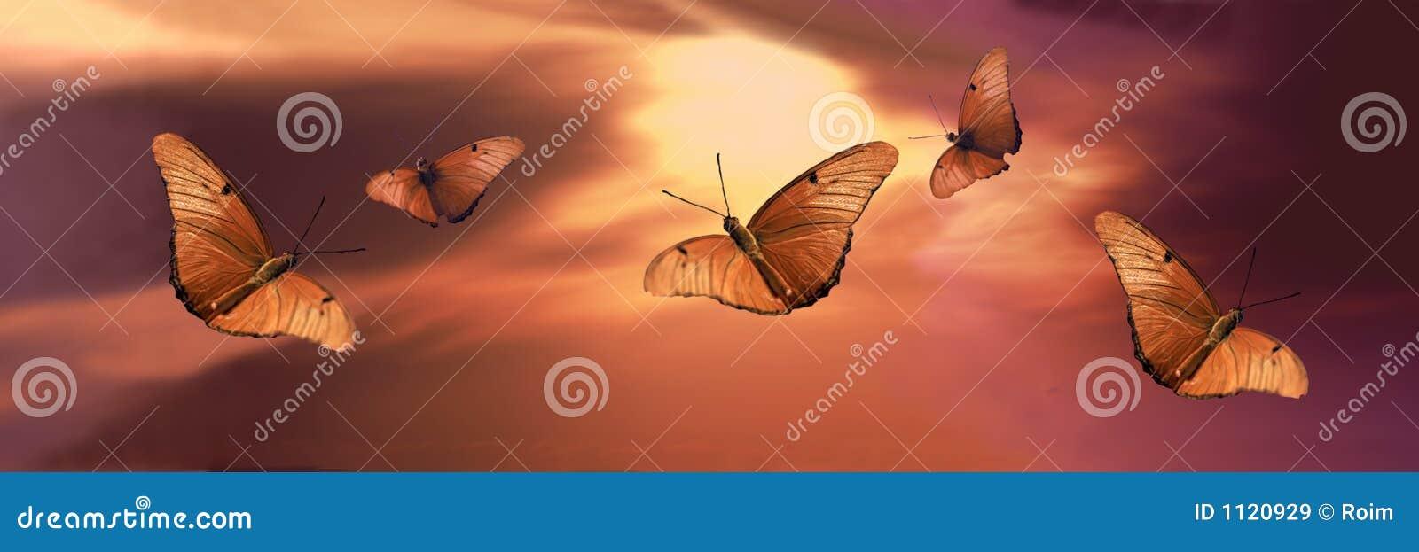 Fjärilssolnedgång