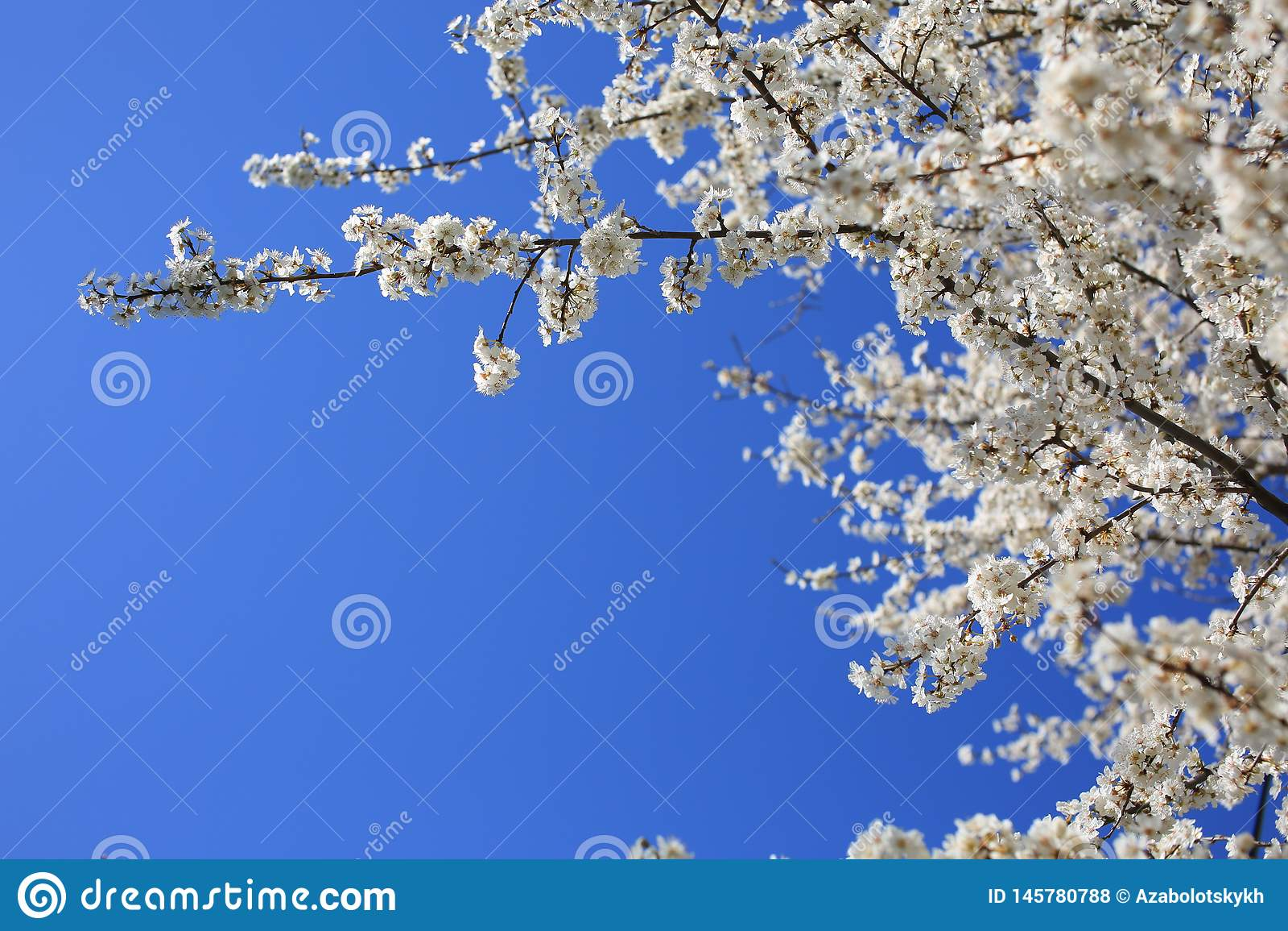 Fj?dra den blomma treen