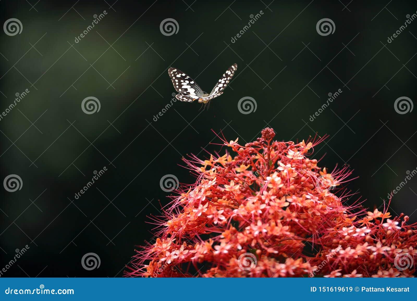 Fj?ril p? r?d blomma