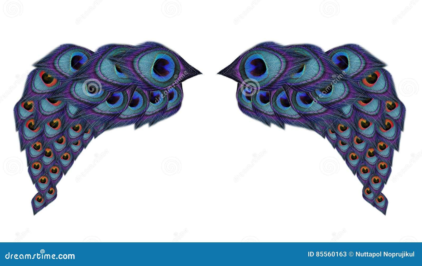 Flügelpfaufedern auf weißem Hintergrund