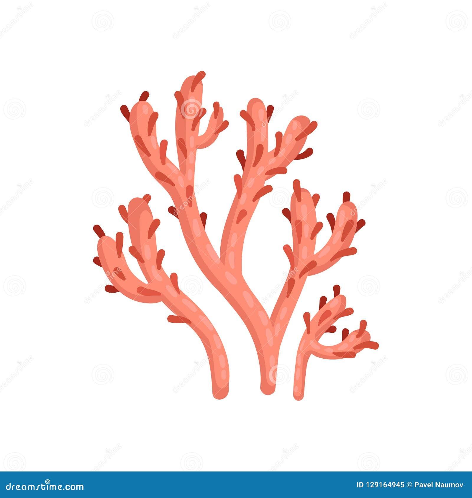 Flache Vektorikone der hellen roten weichen Koralle Anlage des tropischen Wassers Marine Ecosystem See- und Ozeanleben