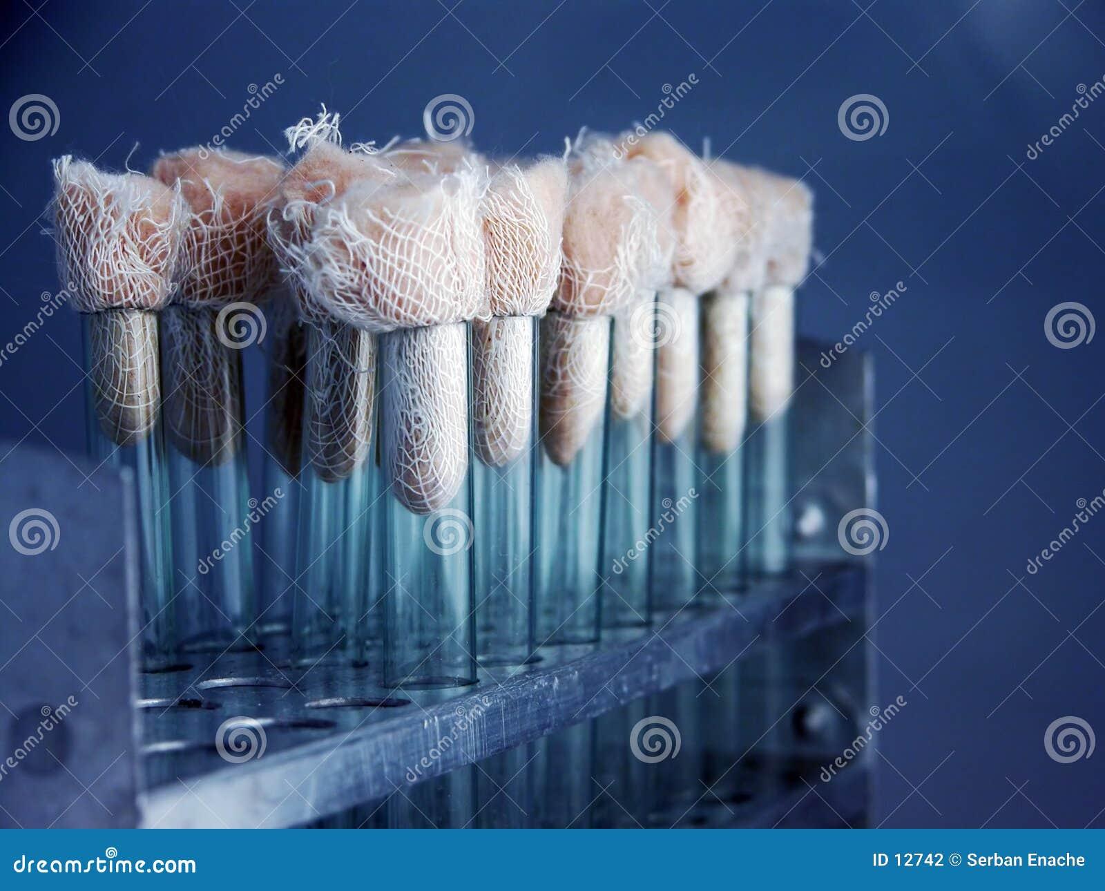 Flacons de laboratoire