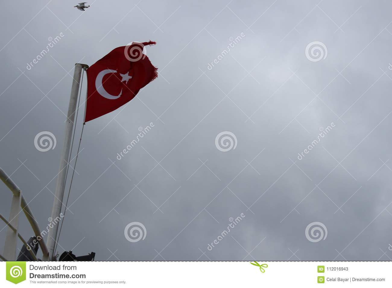 Download Sea flag and seagull stock image. Image of world, traveling - 112016943
