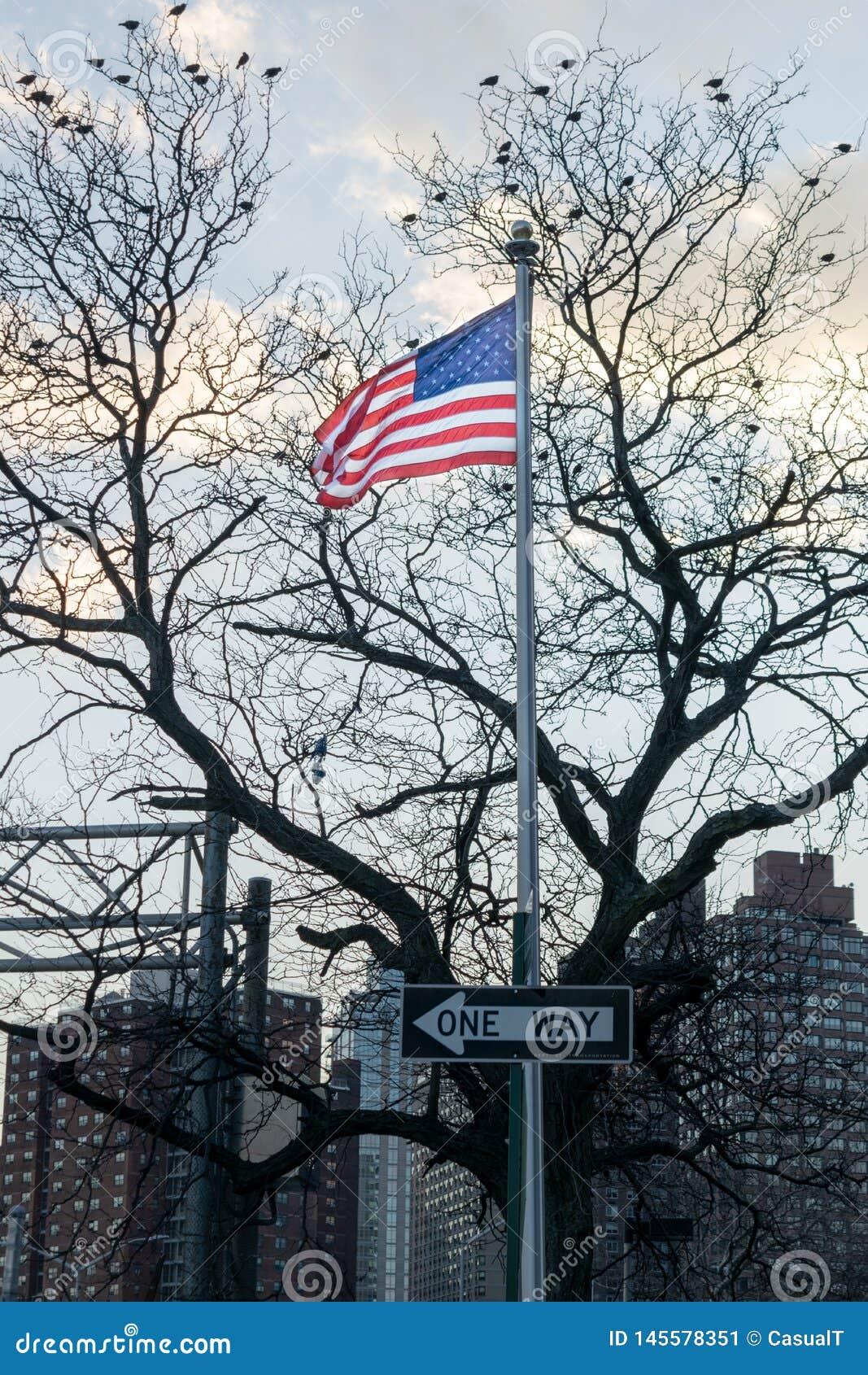 Flaga Ameryka?ska, gwiazdy i lampasy dmucha w wiatrze na s?upie z JEDEN sposobem szyldowym w bezlistnym drzewie, ptaki siedzi