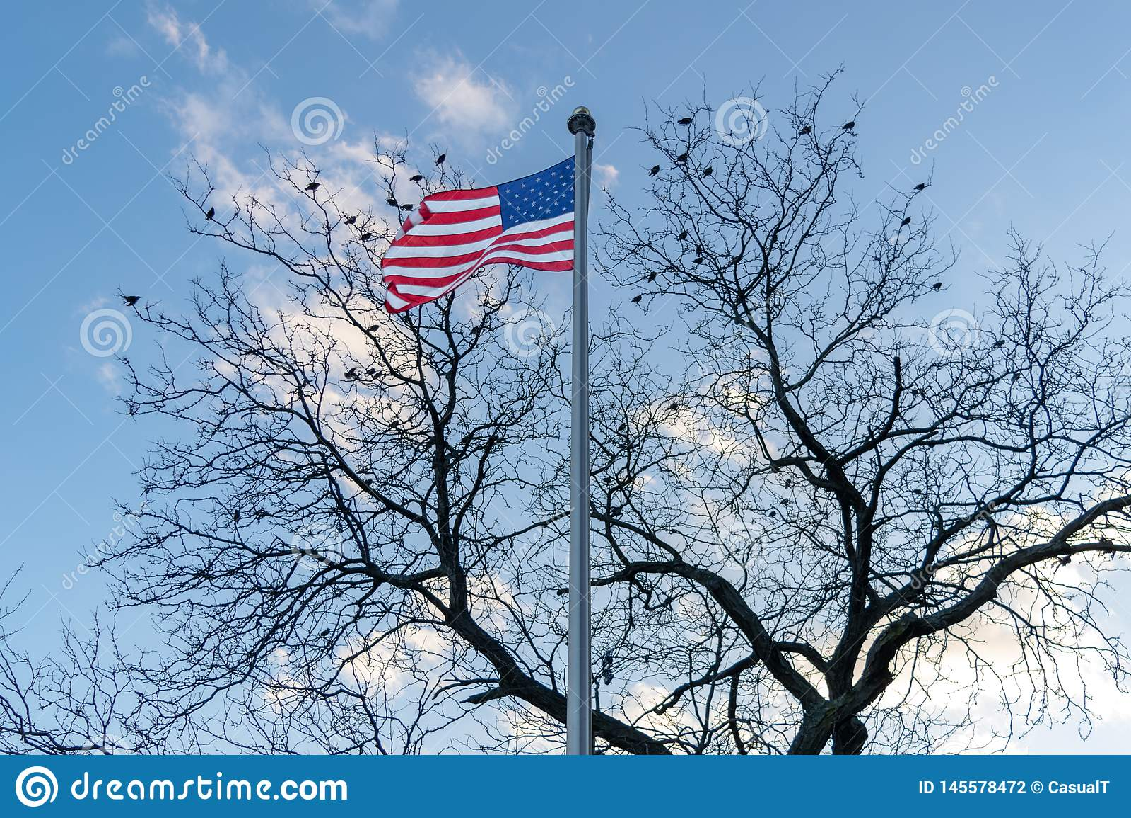 Flaga Ameryka?ska, gwiazdy i lampasy dmucha w wiatrze, ptaki siedzi w bezlistnym drzewie w tle, ?rodek miasta