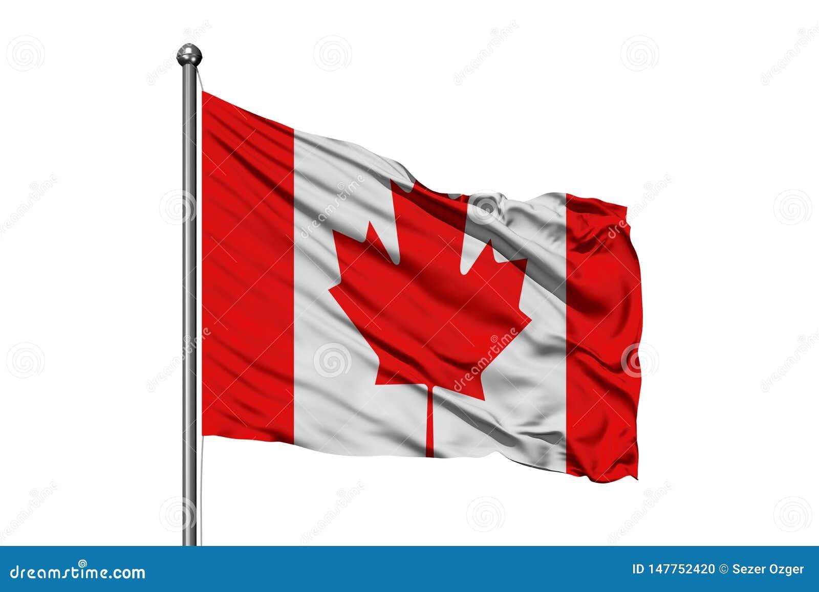 Flaga Kanada falowanie w wiatrze, odosobniony biały tło kanadyjskiej flagi