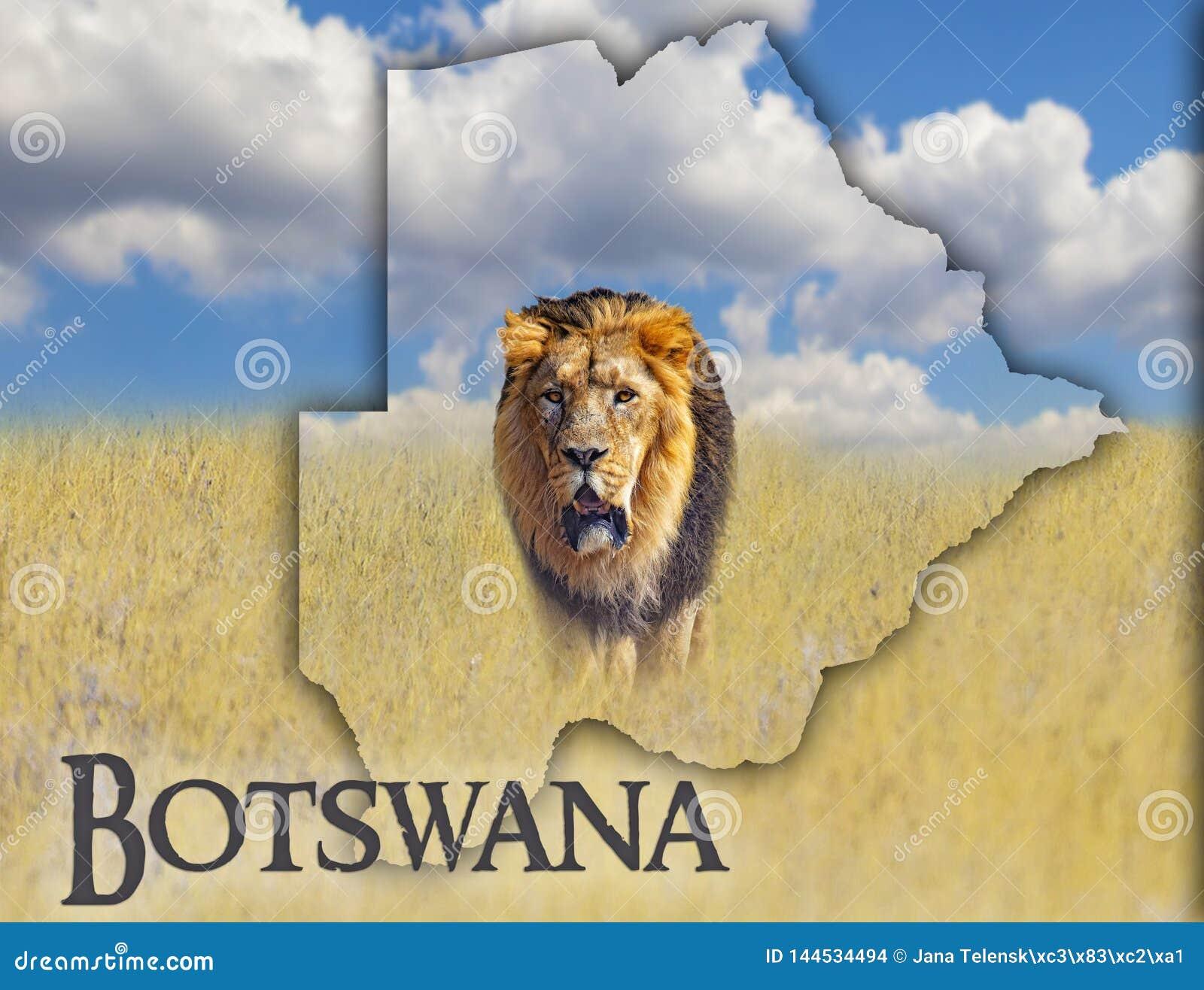 Flagga?versikt av Botswana som ?r p? en bild av ett lejon Det finns texten av Botswana Det finns det ?r nationell afrikansk bakgr