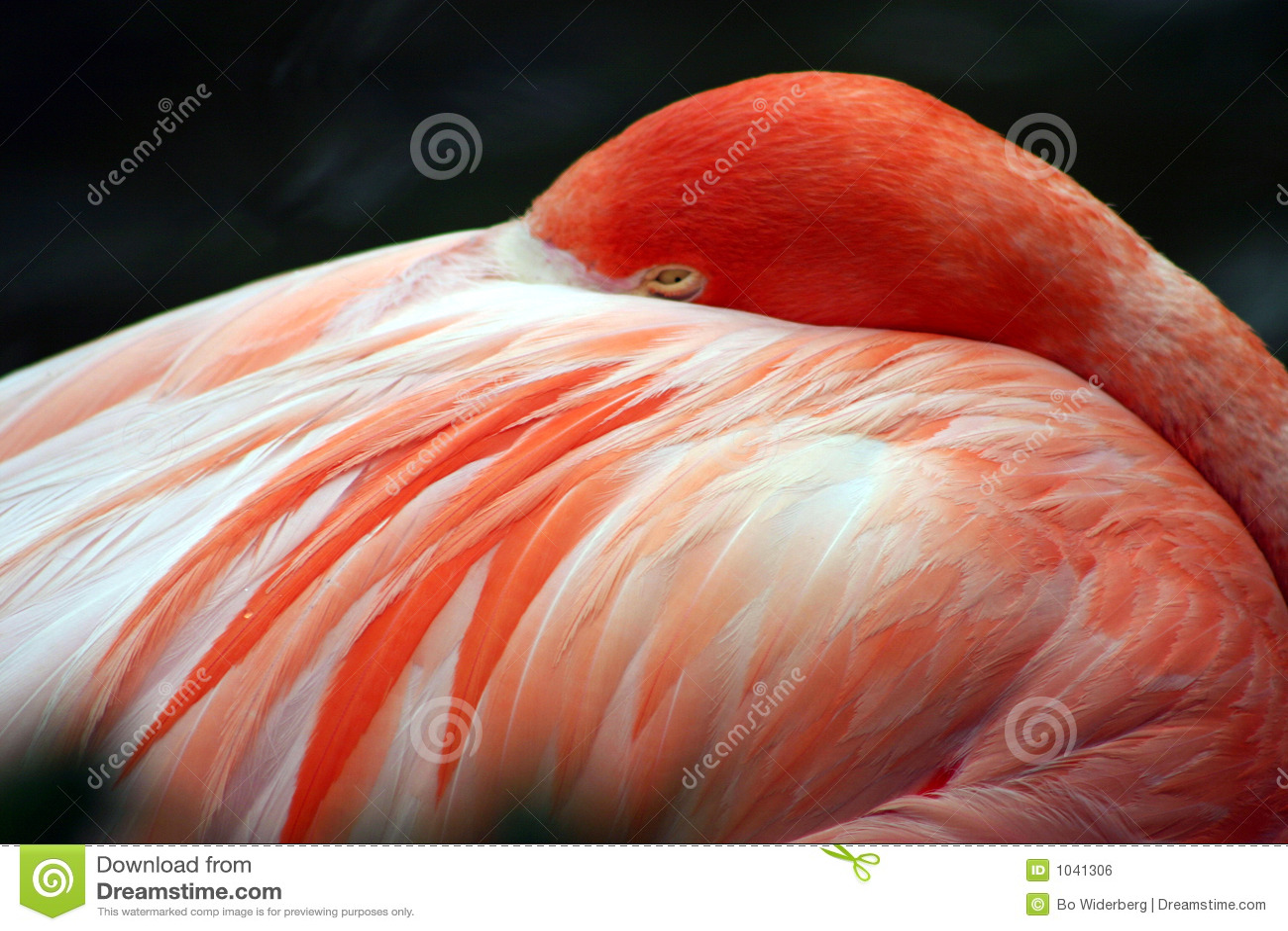 Flamant rose au monde de mer, Orlando, la Floride