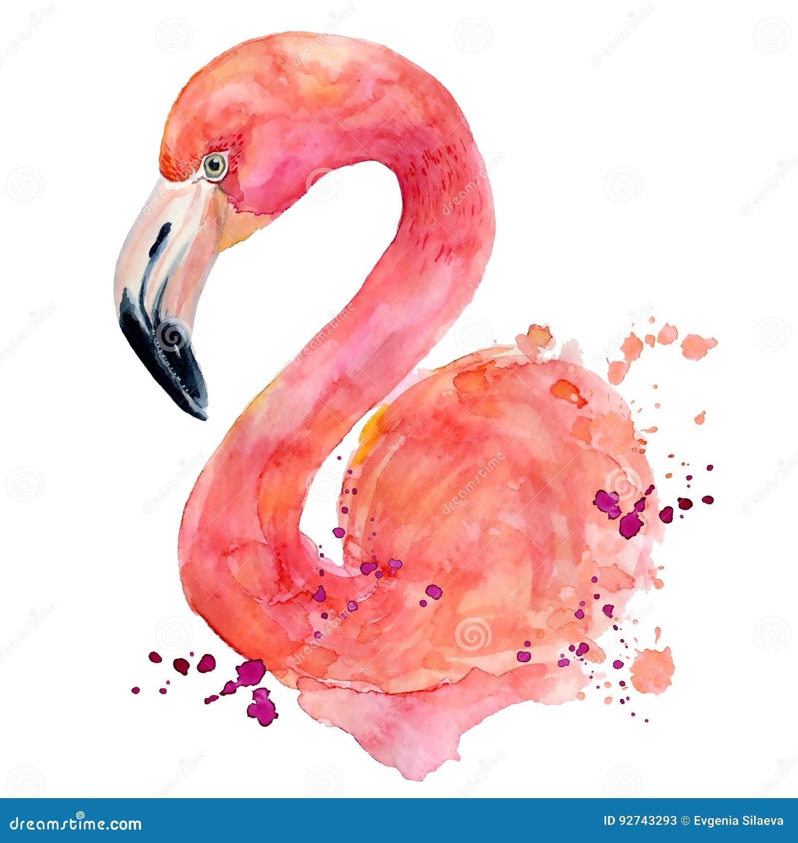 flamant rose d 39 aquarelle illustration stock illustration du main 92743293. Black Bedroom Furniture Sets. Home Design Ideas
