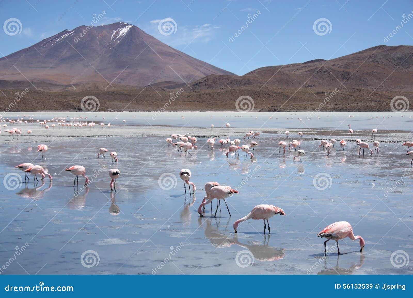 Flamencos en la laguna Hedionda, Bolivia, desierto de Atacama