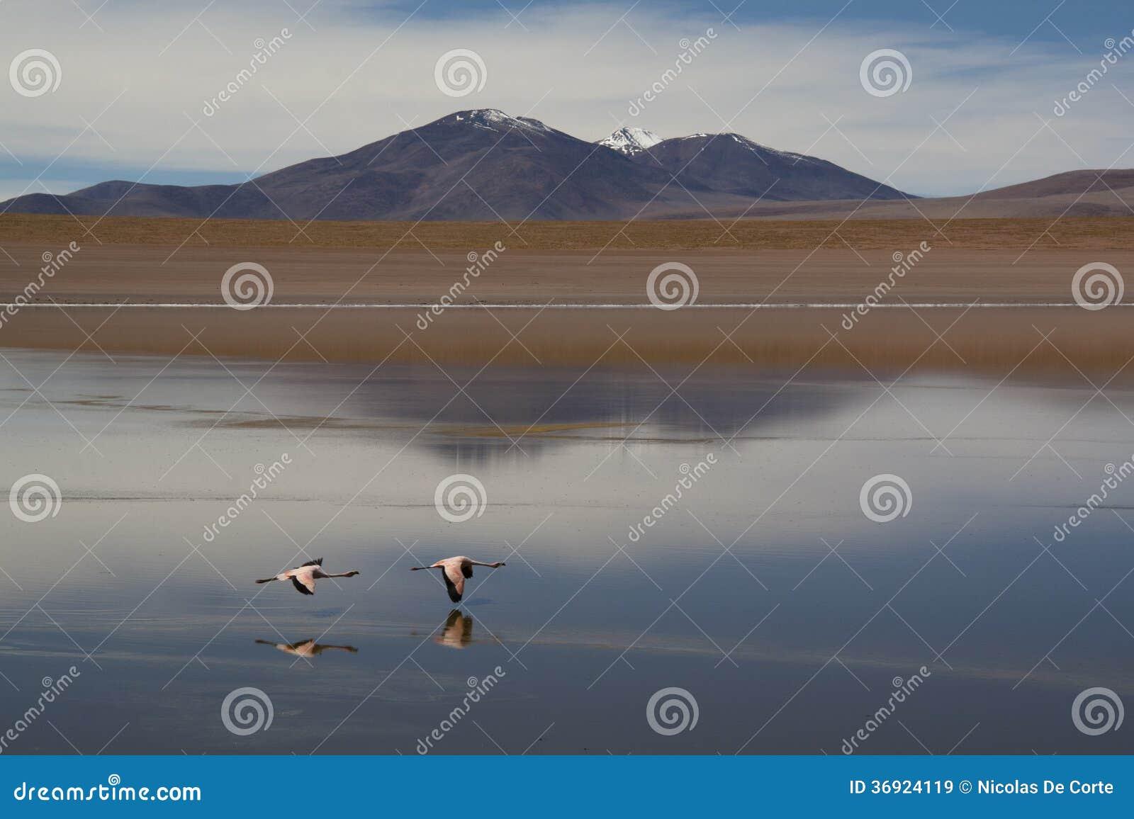 Flamingi przy średniogórzami