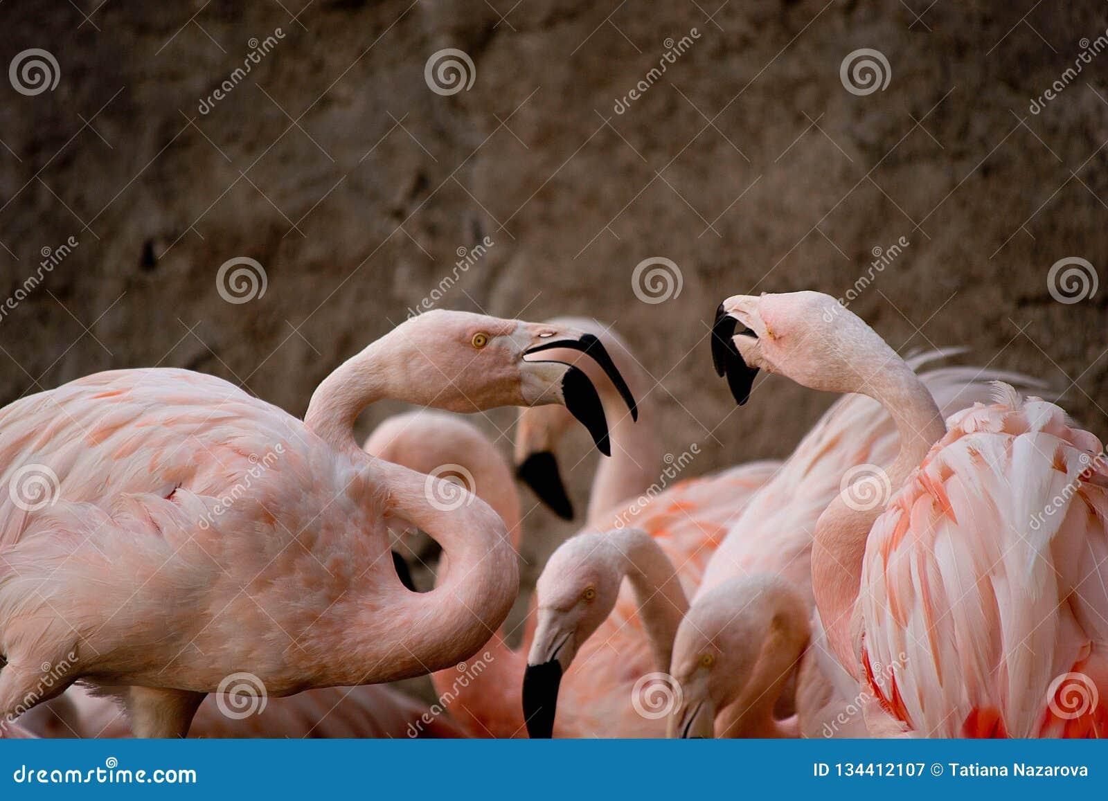 Flamingo bij de dierentuin