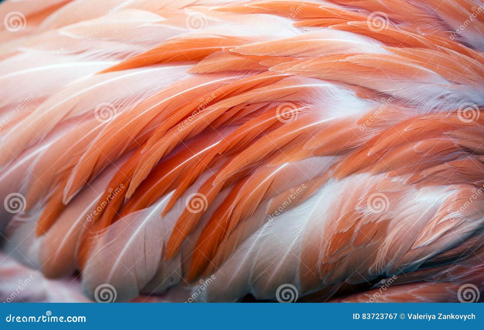 Flamingo Feather Background Stock Photo