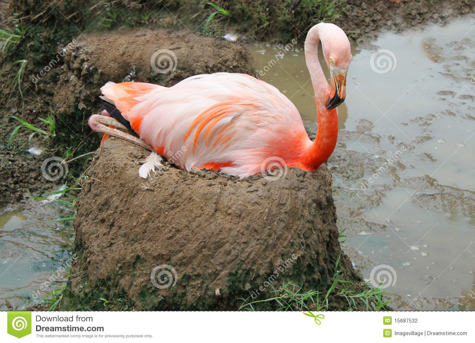 Flamingo nest - photo#3