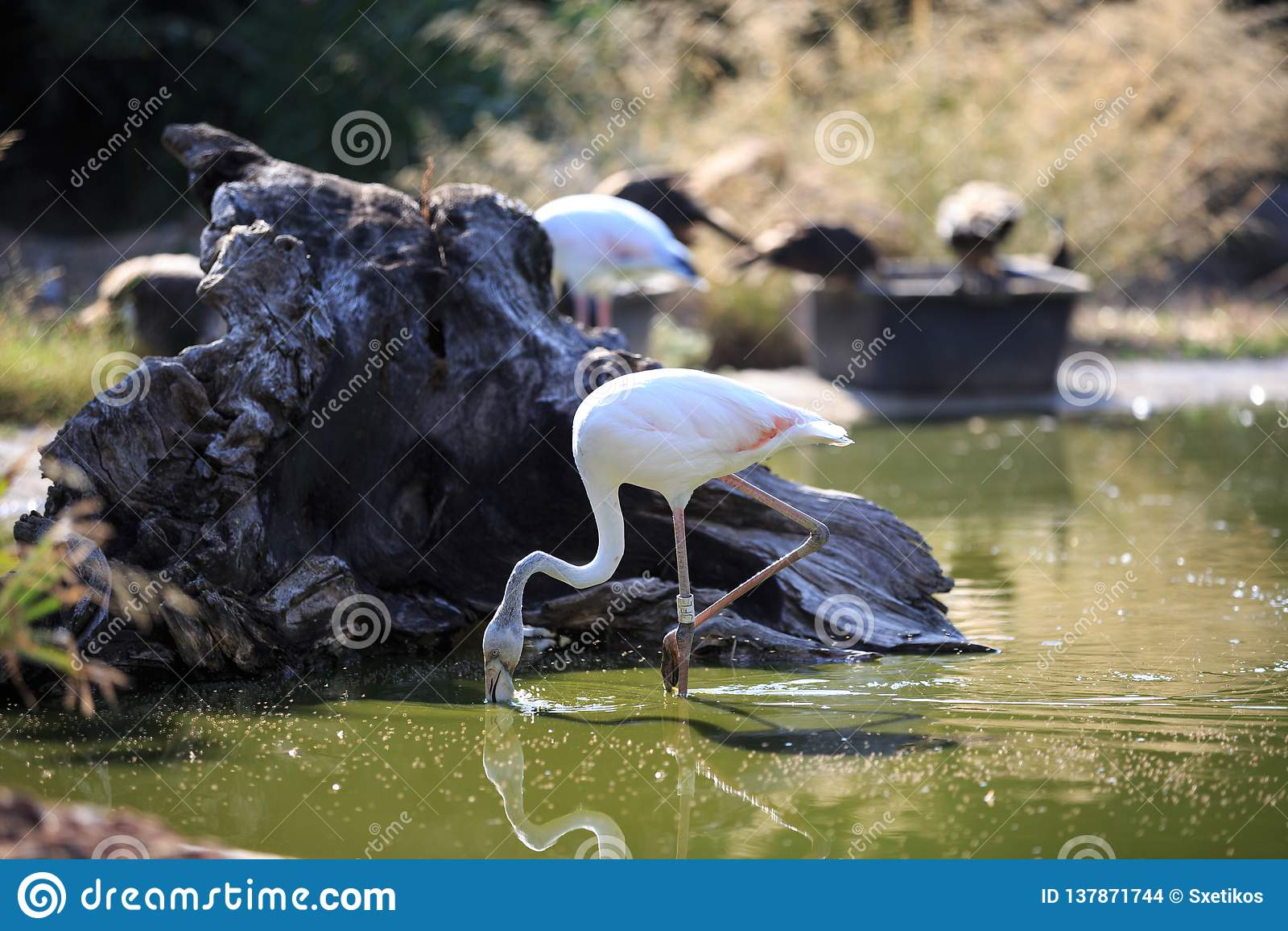 Flamingo am Park