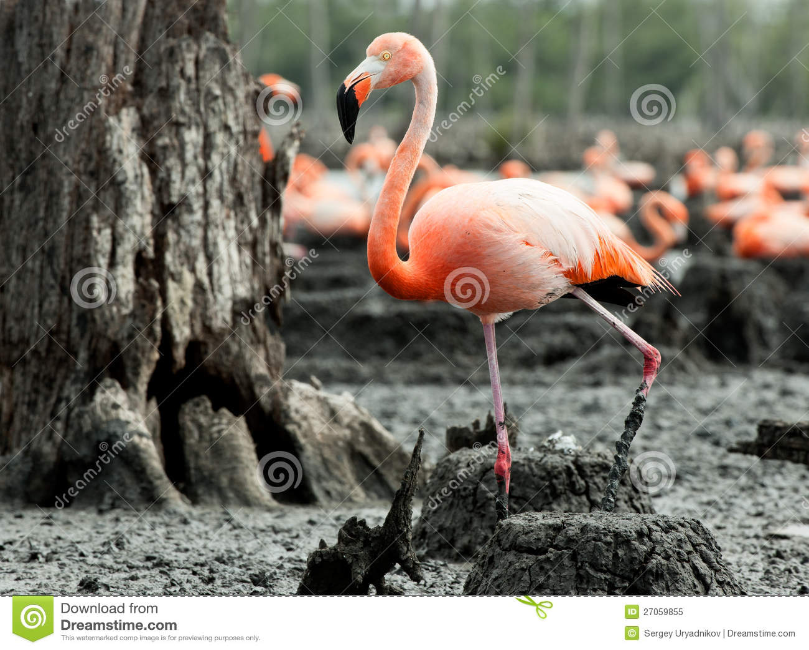 Flamingo nest - photo#39