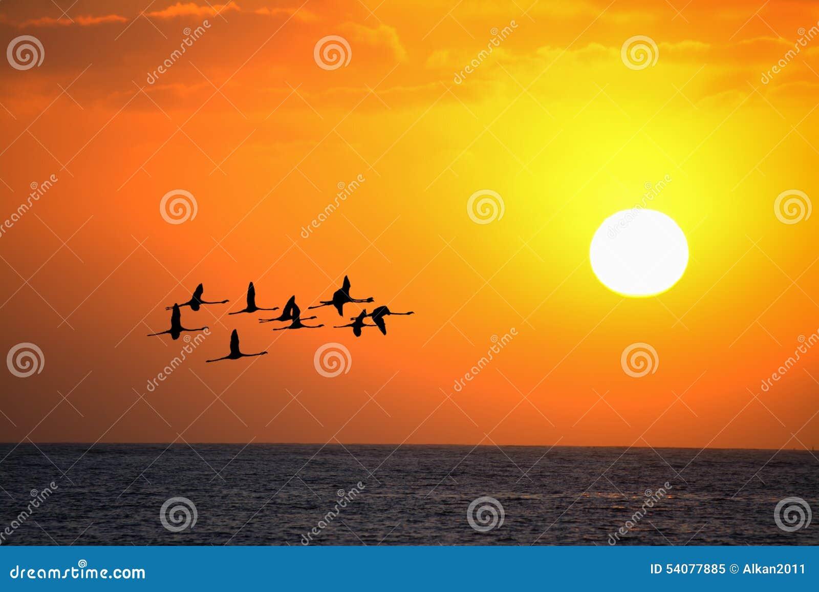 Flamingo s die bij zonsondergang onder een heldere zon vliegen