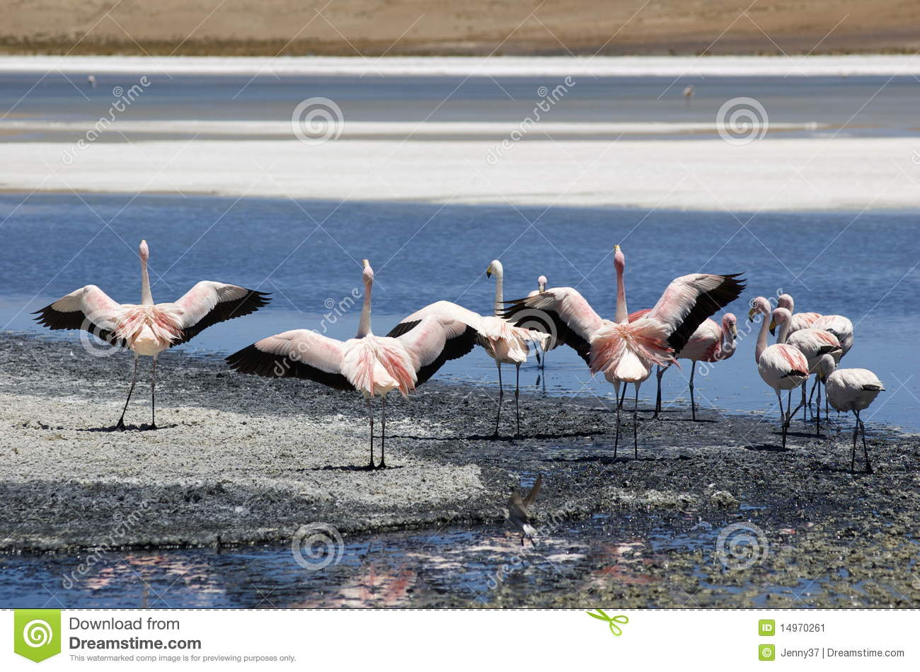 Flamingo s in Salar DE Uyuni