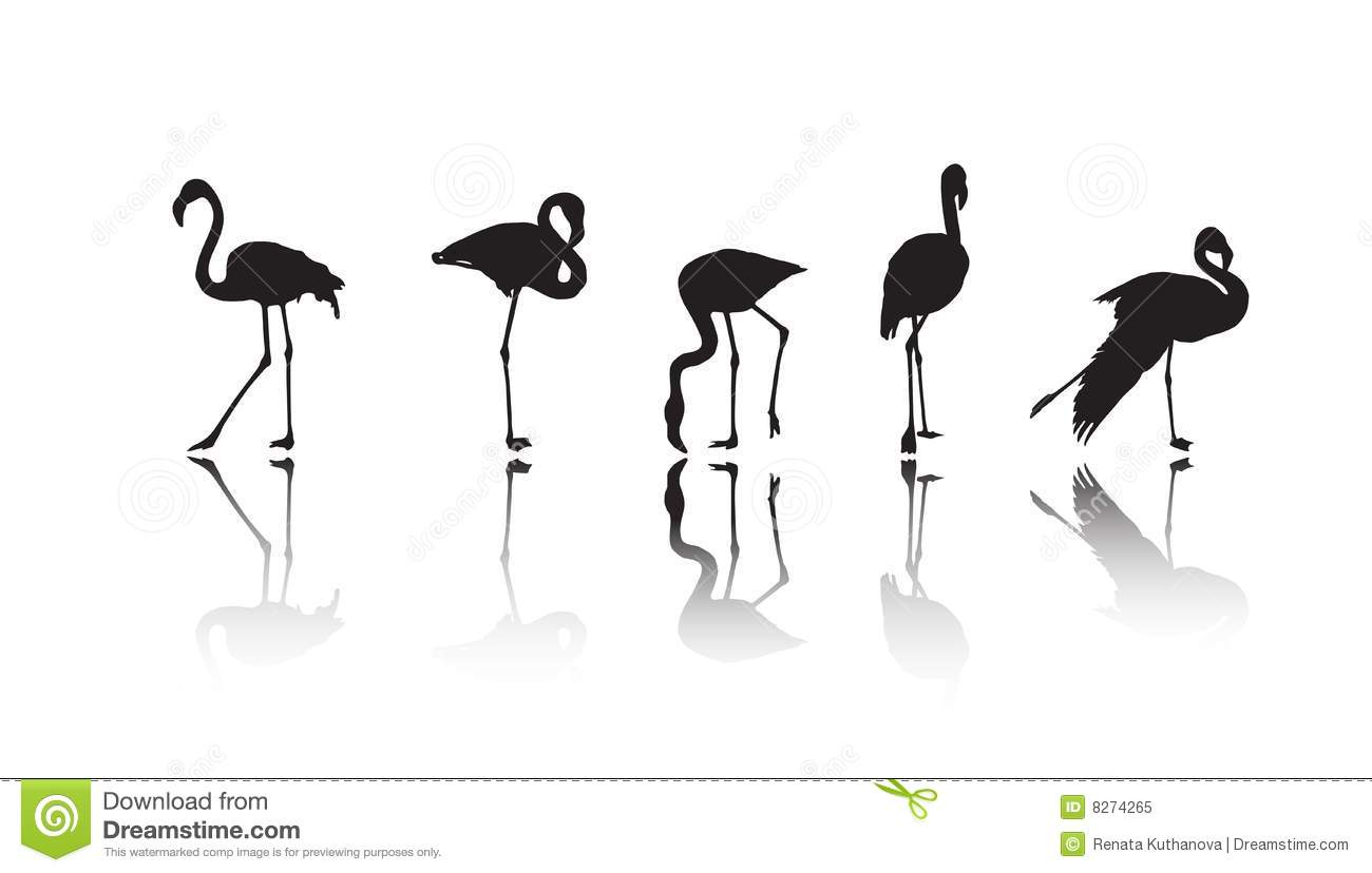 Flamingo Silhouettes Vector With Reflection