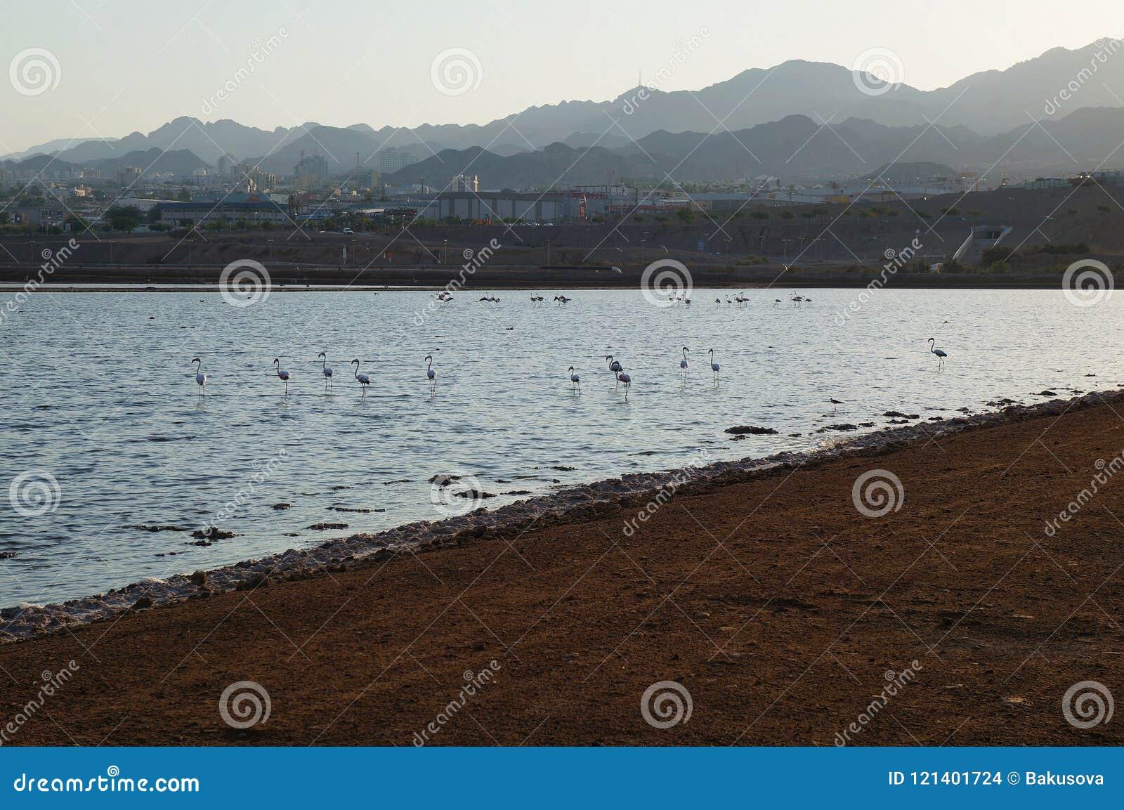 Flamingoreste im birding Park