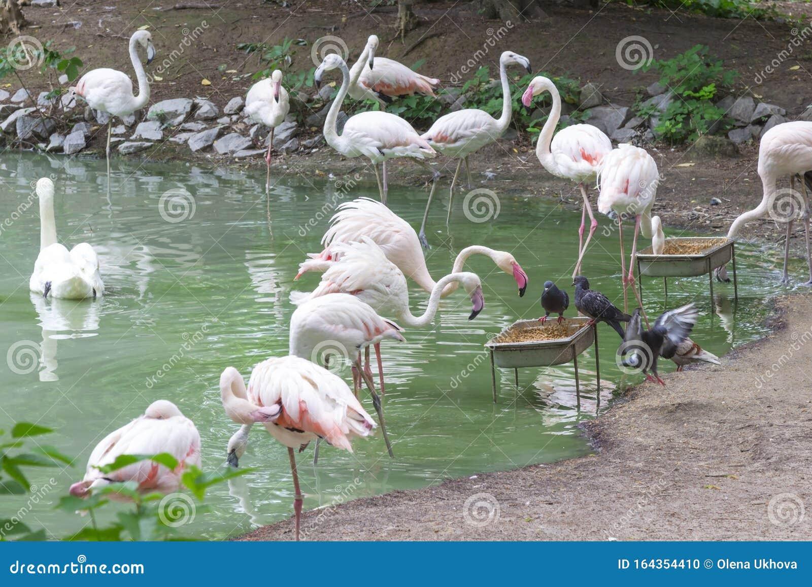 Was Essen Flamingos