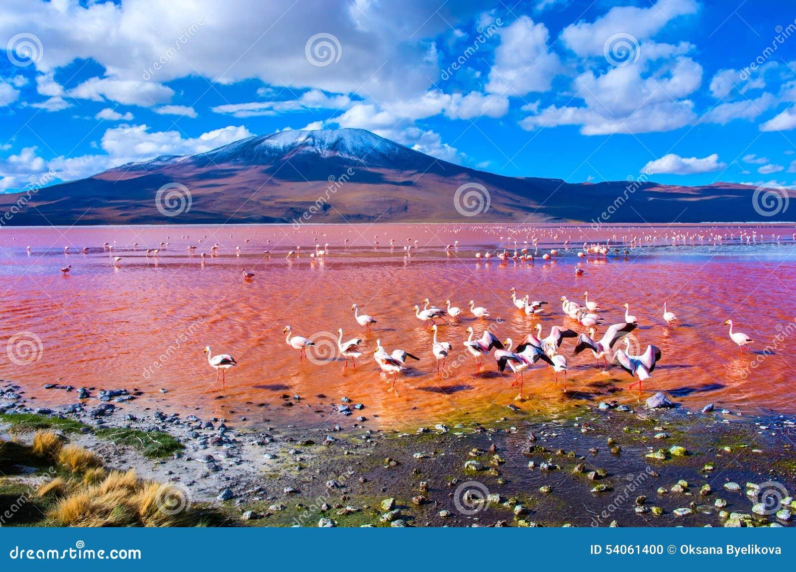 Flamingos in Laguna Colorada, Bolivien
