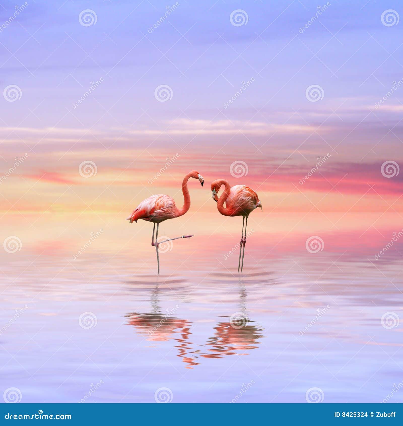 Flamingos love