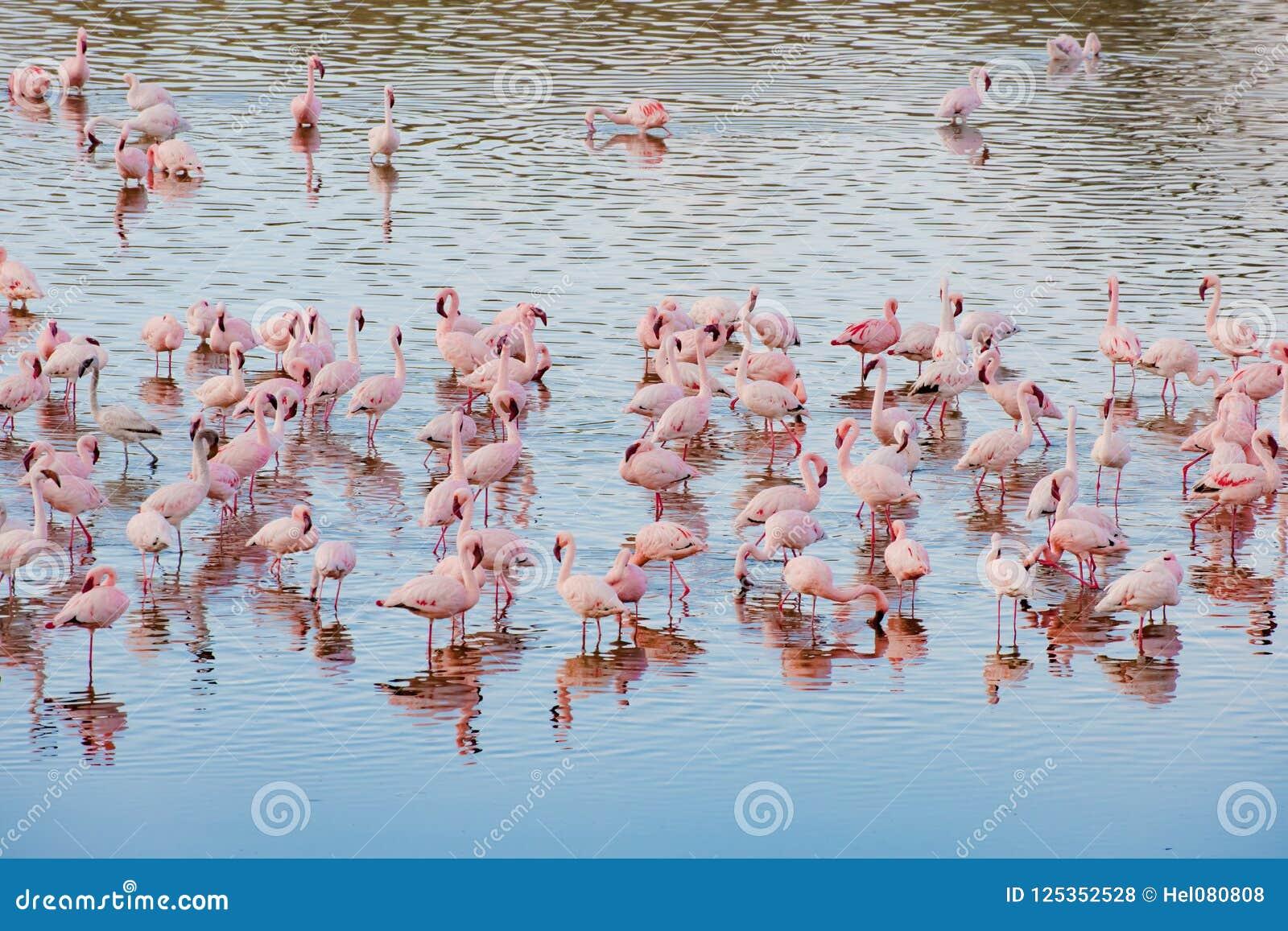 Flamingos in Momela Lake, Arusha National Park, Tanzania
